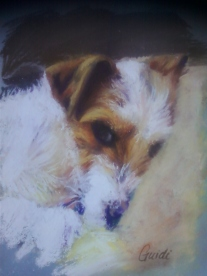 jack russell Guidi-Image5